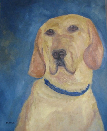 Portrait of Chesterfield a Yellow Labrador Retriever