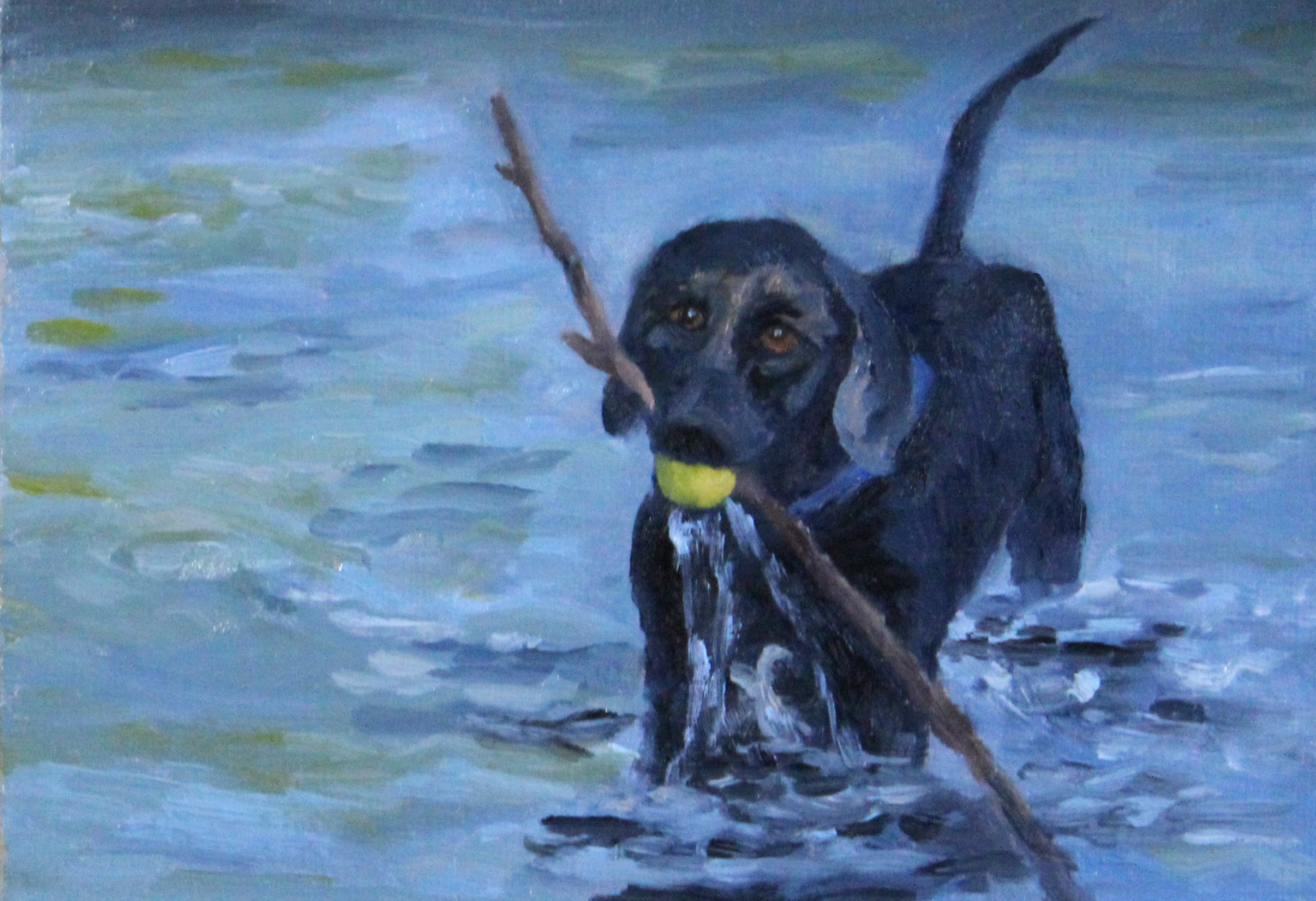 Starboard Black Labrador Retriever playing wih ball and stick